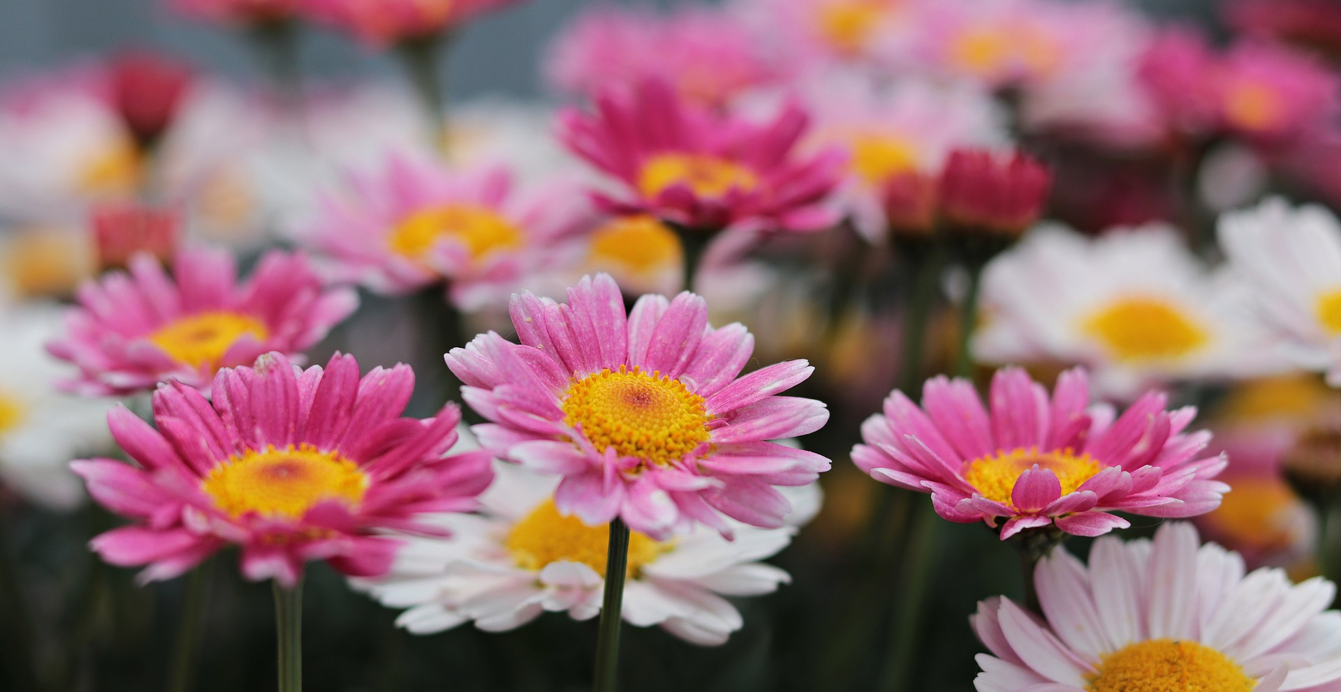 Header images of colourful daisies in a field